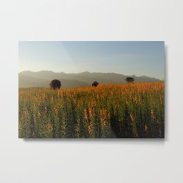 Poppy Fields Metal Print