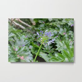 Lily of the Nile Metal Print