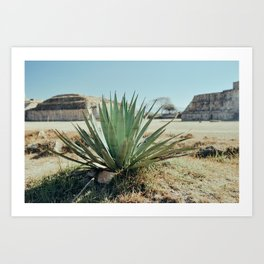 Aloe among the Piramides. Mexico  Art Print