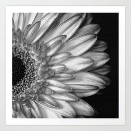 Black And White Print of Gerber Daisy Art Print