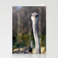ostrich Stationery Cards featuring Ostrich by JBuck