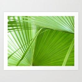 Palm Leaves // Tropical Wall Art, Beach Cottage Decor, Coastal Art Art Print