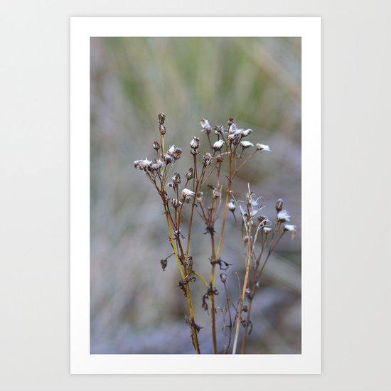 Frosty Seeds Art Print
