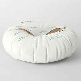 Anatomy of a Dachshund Floor Pillow