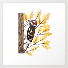 Downy Woodpecker Art Print
