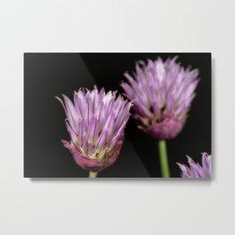 Purple clove flowers Metal Print