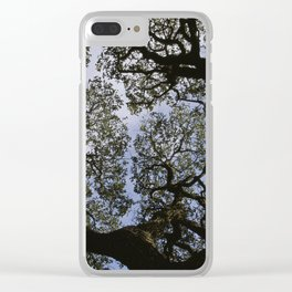 Oak Tree Reaching For The Sky Clear iPhone Case