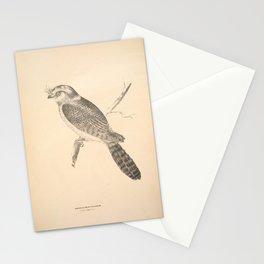 Vintage Print - Companion to Gould's Birds of Australia (1877) - Owlet Nightjar Stationery Cards