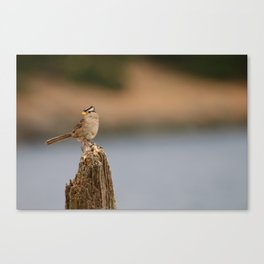 Checking things out! Canvas Print