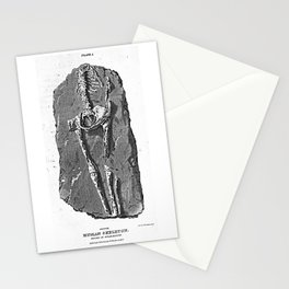 Fossil. Human Skeleton. Found in Guadaloupe Stationery Cards