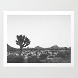 JOSHUA TREE / California Art Print