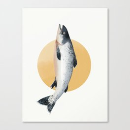 Malibu Salmon Canvas Print