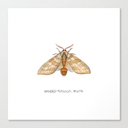 Banded Tussock Moth Canvas Print