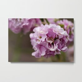 Pink Hydrangea Flower - Original Botanical Nature Photography - Flora Art  Metal Print