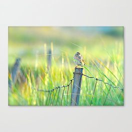 Sable Island Ipswich Sparrow - Species at risk Canvas Print