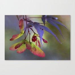 Japanese Maple Seeds Canvas Print