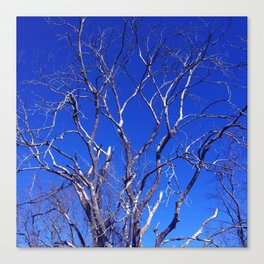 Dead Tree Defiance Canvas Print