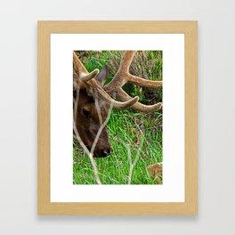 Don't Mount Me. Framed Art Print