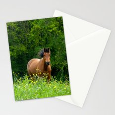 Horse in a pature Stationery Cards