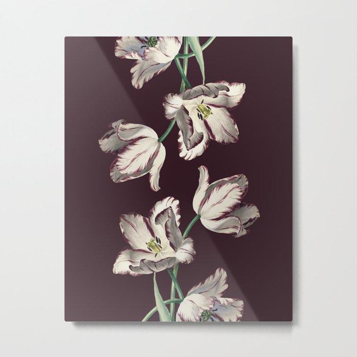 Tulipa Metal Print