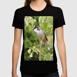 Red-Whiskered Bulbul -- 2 T-shirt