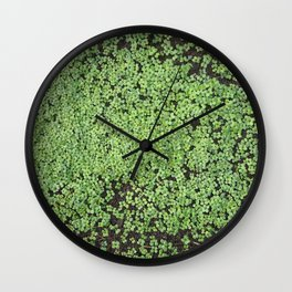 Tender shoots of white mustard Wall Clock