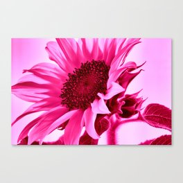 Hot Pink Sunflower Canvas Print