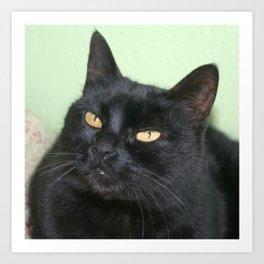 Relaxed Black Cat Portrait  Art Print