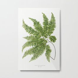 Adiantum Curvatum from Ferns British and Exotic (1856-1860) by Edward Joseph Lowe Metal Print