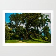 A mighty mighty live oak Art Print