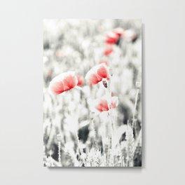 Poppy Poppies Mohn Mohnblume Flower Metal Print