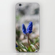 Grape Hyacinth II iPhone & iPod Skin
