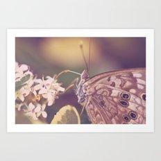 Closeup of a butterfly Art Print