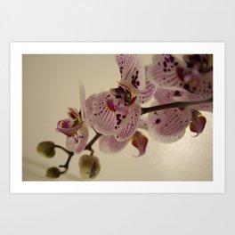 Bloom White Art Print
