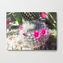 cactus in the desert with beautiful blooming pink flower Metal Print