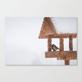Parus Major bird Canvas Print