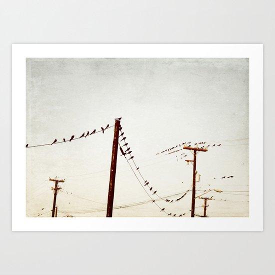 city birds Art Print