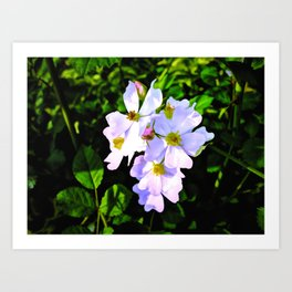 The Wild Rose In Living Color Art Print