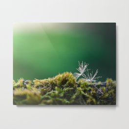 Dandelion Moist Metal Print