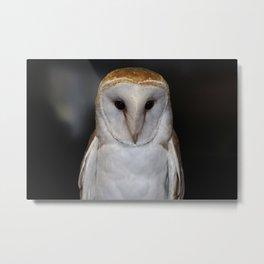 Luther- Common Barn Owl VI Metal Print