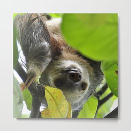 Sloth_20171105_by_JAMFoto Metal Print