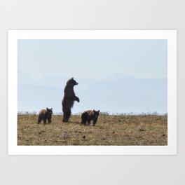 Standing Cinamon Black Bear with Two Cubs at Pryor Mountain Art Print