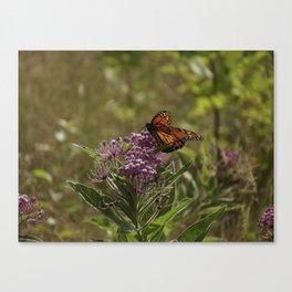milkweed with wanderer Canvas Print