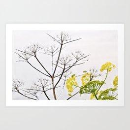 YELLOW WILD-FLOWERS of Sicily Art Print