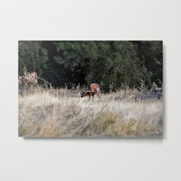 Deer Sratching Its Ear Metal Print