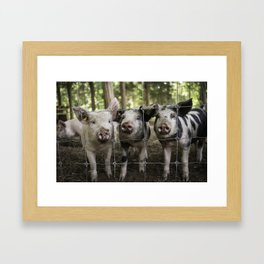 Three little pigs Framed Art Print