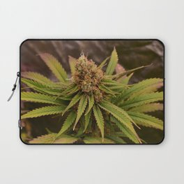 Dieharder Laptop Sleeve