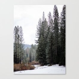 Blanketed Forest Canvas Print