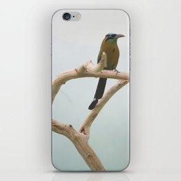 more birds 2 iPhone Skin