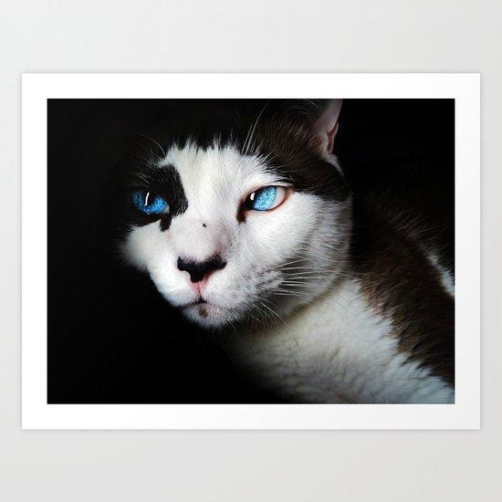 Cat siamese blue eyes Art Print